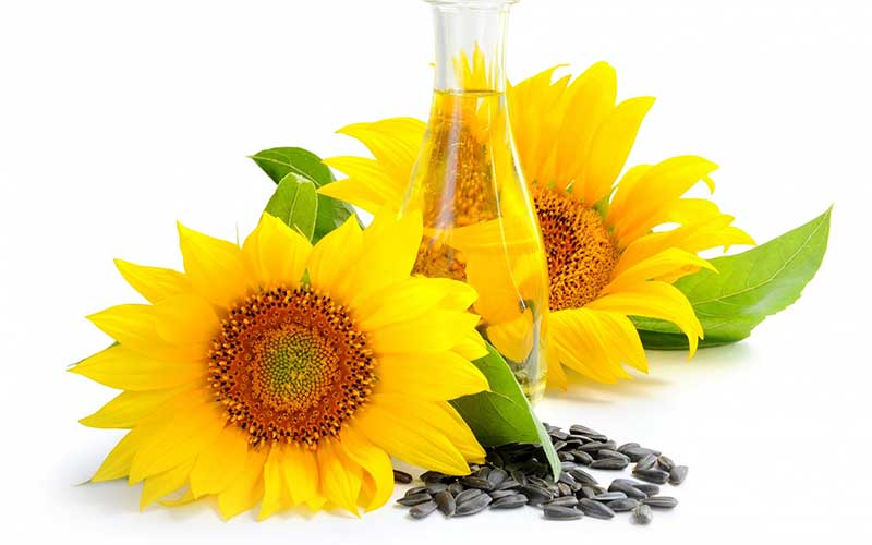 Sunflower seed oil in caveat